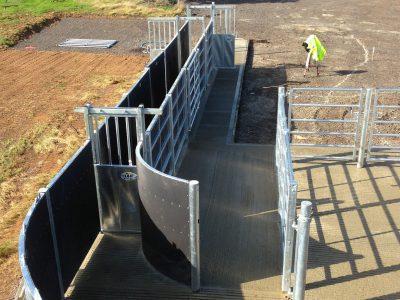cattle handling system